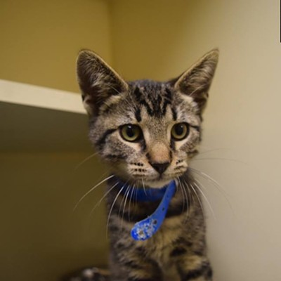 Memphis Pets of the Week (Dec. 1-7)