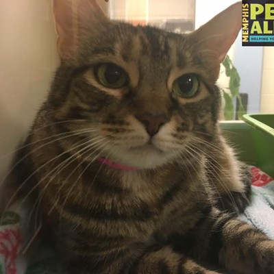 Memphis Pets of the Week (Dec. 8-14)