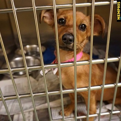 Memphis Pets of the Week (Dec. 22-Jan. 4)