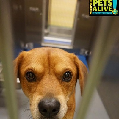 Memphis Pets of the Week (Jan. 26-Feb. 1)