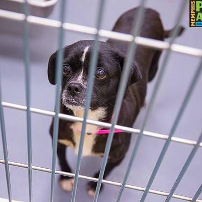 Memphis Pets of the Week (Feb. 2-8)