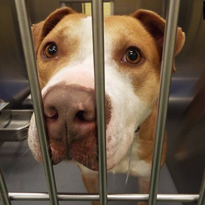 Memphis Pets of the Week (March 2-8)