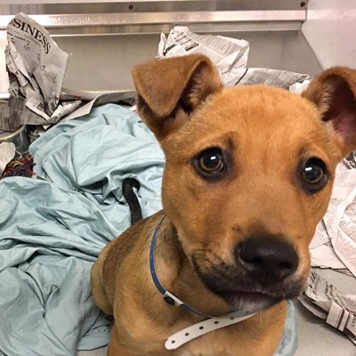 Memphis Pets of the Week (March 30-April 5)
