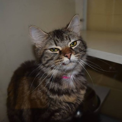 Memphis Pets of the Week (May 18-25)