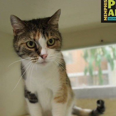 Memphis Pets of the Week (July 13-19)