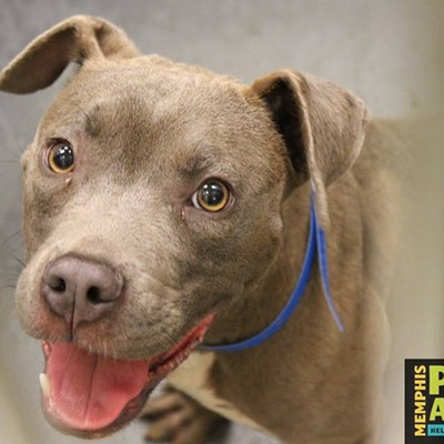Memphis Pets of the Week (July 20-26)