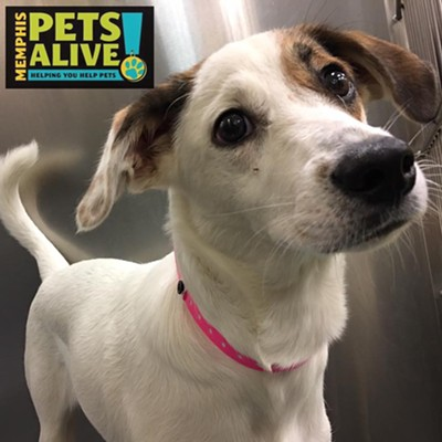 Memphis Pets of the Week (July 27-August 2)