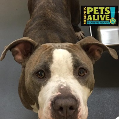 Memphis Pets of the Week (Aug. 24-30)