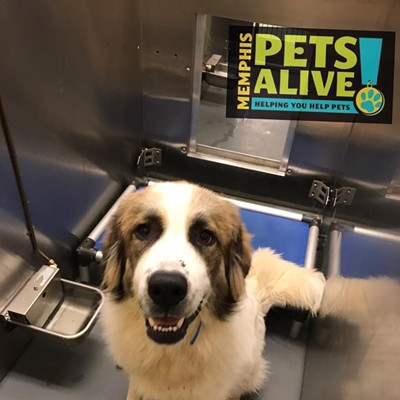 Memphis Pets of the Week (Sept. 7-13)