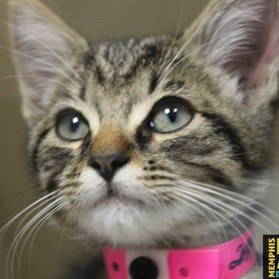 Memphis Pets of the Week (Sept. 28-Oct. 4)