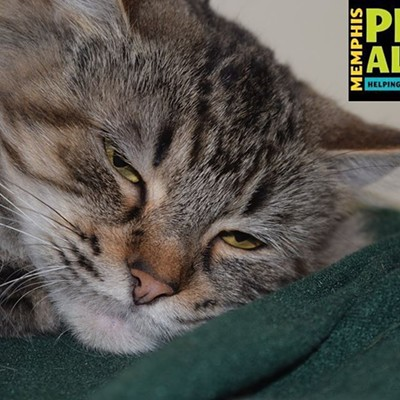 Memphis Pets of the Week (Nov. 2-8)