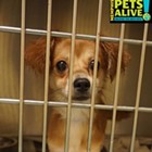 "Each week, the Flyer will feature adoptable dogs and cats from Memphis Animal Services. All photos are credited to Memphis Pets Alive. More pictures can be found on the <a href=""https://www.facebook.com/MemphisPetsAlive/"" target=""_blank"">Memphis Pets Alive Facebook page.</a>"