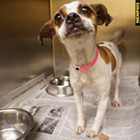 "Each week, the Flyer will feature adoptable dogs and cats from Memphis Animal Services. All photos are credited to Memphis Pets Alive. More pictures can be found on the <a href=""https://www.facebook.com/MemphisPetsAlive/"" target=""_blank"">Memphis Pets Alive Facebook page</a>.<br>"