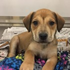 "Each week, the Flyer will feature adoptable dogs and cats from Memphis Animal Services. All photos are credited to Memphis Pets Alive. More pictures can be found on the<a href=""https://www.facebook.com/MemphisPetsAlive/"" target=""_blank""> Memphis Pets Alive Facebook page.</a><br>"