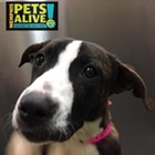 "Each week, the Flyer will feature adoptable dogs and cats from Memphis Animal Services. All photos are credited to Memphis Pets Alive. More pictures can be found on the <a href=""https://www.facebook.com/MemphisPetsAlive/"" target=""_blank"">Memphis Pets Alive Facebook page</a>.<br> <br> <br>"