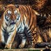 Zoo to Raise Ticket Prices Next Year
