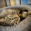 Memphis Pets of the Week (1/21/20-1/27/20)