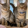 Memphis Pets of the Week (3/3/20-3/9/20)