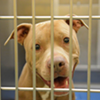 Memphis Pets of the Week (March 9-15)