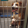 Memphis Pets of the Week (July 21-27)