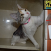 Memphis Pets of the Week (August 11-17)