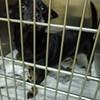 Memphis Pets of the Week (Oct. 6-12)