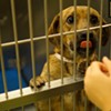 Memphis Pets of the Week (Dec. 15-21)