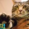 Memphis Pets of the Week (June 1-8)