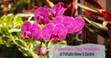 Orchids are one of many plants available for Valentine's Day Delivery - Uploaded by C. David McGee