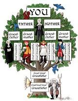 86bfc3f3_genealogy_tree.jpg
