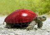 turtle_picture_jpg-magnum.jpg