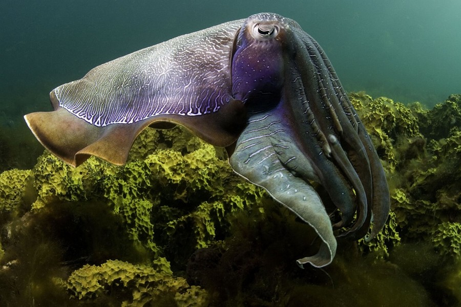 prnphotos074964-imax-under-the-sea--789680.jpg