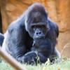 Zoo Rendezvous 2012