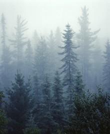 treesjpg