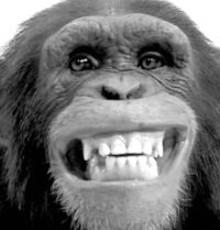 chimpjpg