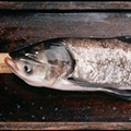 FSI: Fish Scene Investigator