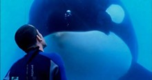 If you were a majestic, powerful and temperamental orca used as a sideshow attraction, you might lash out too.