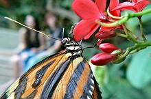 big_butterflyjpg