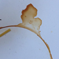 Photo of the Day: Coffee stains that look like Michigan