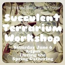d24f0993_succulent.workshop.image.jpg