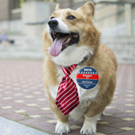 Students organize to elect a corgi as U-M student government president