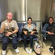 Metro Detroit man's rescue puppies comfort strangers in Seattle plane hijacking