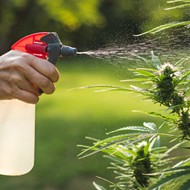 Commercial Cannabis Craft Act takes aim at homegrown marijuana