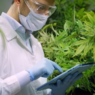 Long-stubborn DEA finally gets real about marijuana's medical benefits