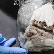 Human brain discovered inside Canadian mail truck at Michigan border