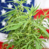Politics and marijuana intertwine in 2020