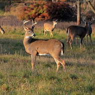 Michigan hunters, anglers set 2021 conservation goals