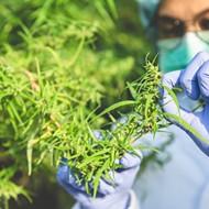 Michigan's marijuana tax revenue funds $20M studies on medical cannabis for veterans with PTSD