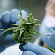 Researchers in Michigan and beyond are just beginning to understand the full benefits of cannabis