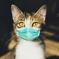 Michigan reports its first case of COVID-19 in a cat